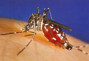 Bird in Naperville Will County's first confirmed case  of West Nile Virus in an animal