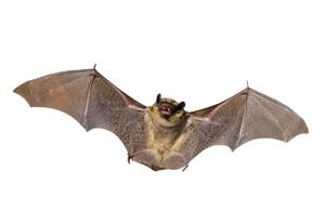 Sixth rabid bat reported in Will County