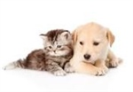 Will County offers residents spay/neuter discount for pets in October