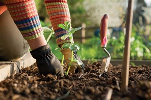 Free gardening plots available to veterans through Will County program